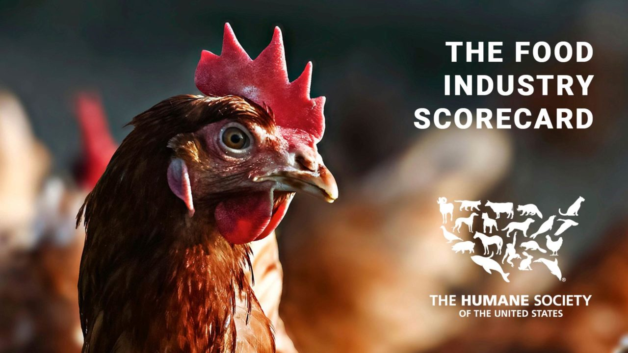 Humane Society Scorecard Report Names SFE in Top 5 Food Companies