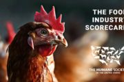 Humane Society Scorecard Report Names SFE in Top 5 Food Companies